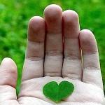 cuore_verde--400x300
