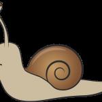 snail-710086_1280
